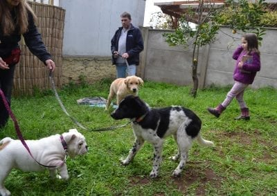 kinder cachorros 4